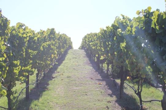 Napa tháng 10, mùa hái nho đã xong, bắt đầu vào mùa chưng cất rượu