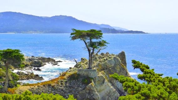 17-mile-drive-lone-cypress-tree1